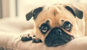 Dog Care After Neuter